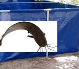 Buy High Quality Mobile Fish Pond Tarpaulin,650 Catfish, Nationwide Delivery