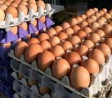 jumbo crates of eggs for sale