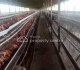 A Poultry With 10,000 Capacity Laying Pan On 3 Acres Of Land