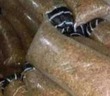 Bags of cray fish for sale