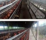 A poultry at odofin Ogun state is for sale on 11686sqm at N40n