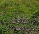 1530sqm Plot With Lagos State Title