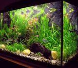 Arnold Aquariums